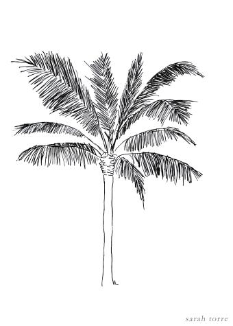 palm1-5x7